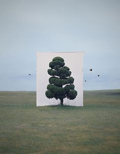 Photography of Myoung Ho Lee. Lee uses giant backdrops to abstract the image of the tree, separating it from its environment. Seen the balloons? Perfectpicture!