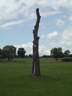 Worst tree...ever! | Flickr - Photo Sharing!