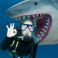 Diese Weißer Hai Angler Trophäe - lebensgroß ist ein cooles Geschenk, dass nicht nur ein mega Hingucker ist, sondern auch einen riesigen Gruselfaktor hat.