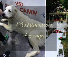 Matrimonio+a+4+zampe