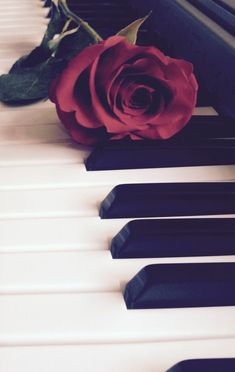 ~ s h e l l y ✧ ~ Rose Wallpaper/ Photography Tumblr Wallpaper, Flower Wallpaper, Mobile Wallpaper, Phone Backgrounds, Wallpaper Backgrounds, Iphone Wallpaper, Touches De Piano, Jolie Photo, Red Aesthetic