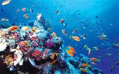 We all have an edge. We all are floating our psyche on top with a great #ocean underneath. Try #diving physically!