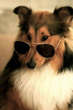 Fashion For All, Original Classic Metal Military Aviator Sunglasses 1041 58mm