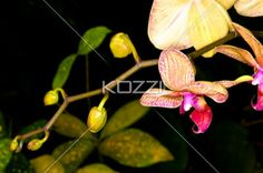 close-up view of flowers and stem. - Close-up shot of flowers and stem.