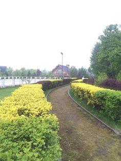 Идеи ландшафтного дизайна на территории общего пользования в КП Иванова Фазенда