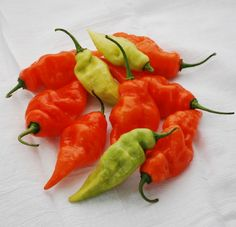 HABANADA - all the exotic, floral flavor of a habanero with none of the heat. Expect abundant harvests when plants have heat, full Sun, even watering, and not too much nitrogen. Harvest when bright orange. 90 days. Open-pollinated. Heat tolerant.