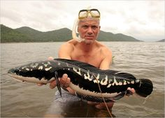 Snakehead The snakeheads are members of the freshwater perciform fish family Channidae, native to Africa and Asia. These elongated, predatory fish are distinguished by their long dorsal fins, large mouths, and shiny teeth