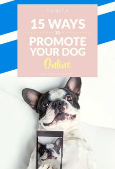 If you want your pooch to be a celebrity, there are many ways that you can promote him online to attract the wanted attention. Instagram Captions For Selfies, Dog Boarding Near Me, Dogs Online, Black Lab Puppies, Corgi Puppies, Famous Dogs, Husky, Puppy Care, Dog Care