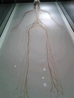 All nerves in the human body