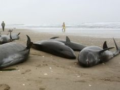 Experts Baffled After 10 Dead Dolphins Wash Ashore In Mumbai, India