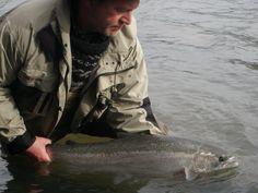 Umpqua River Steelhead