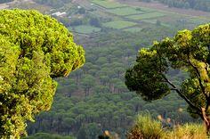 LEBANON, SOUTH, JEZZINE, BEAUTIFUL SHADES OF GREEN