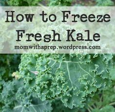 How to Freeze Raw Fresh Kale for smoothies  |  Mom with a Prep Blog