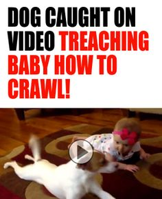 GONE VIRAL: Have you seen this adorable video yet? Dog caught on camera teaching baby how to crawl!