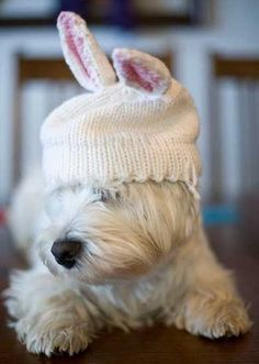 Easter Doggy - a West Highland White Terrier (my favorite puppy)