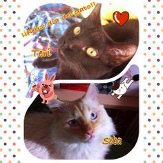 El rincón de Tai: ¡Feliz día de los gatos! (20/2/2014)