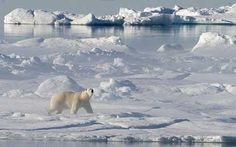 Loss of sea ice, changes to tundra: Study says Arctic faces 19 tipping points Arctic Polar Bears, Arctic Ice, Alaska, Myth Stories, Arctic Landscape, Polaroid, Sea Ice, Global Warming, Climate Change