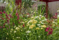 Image result for chelsea flower show show gardens2016