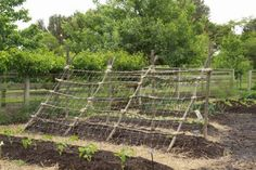 rustic trellis.  this would be great for cukes, and to shade lettuce, spinach and such.