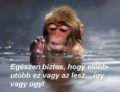 Post with 16 votes and 38 views. Shared by Jigokudani Monkey Park Jigokudani Monkey Park, Spring Animals, About Me Blog, Creature Design, Trending Memes, Picture Video, Funny Jokes, Haha, Funny Pictures