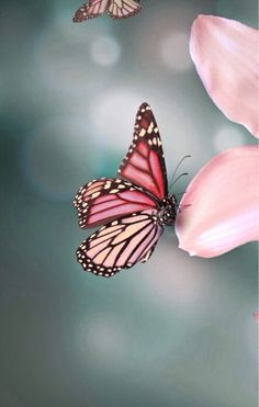 Afbeelding via We Heart It https://weheartit.com/entry/167811116/via/32289496 #botanical #butterfly #colour #flower #flowers #happy #nature #photography #pink #pretty #spring #springtime #sunlight #wildflowers #wildlife #mayflower #floweringtrees #seasonalbloom