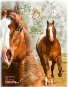 World Champion Open Halter Stallion;  The Leading Sire of Appaloosa Halter Horses; Hall of Fame Stallion; Bronze, Superior, Supreme Production Plaques with 60 different Medallion Winners earning 95 Bronze Medallions & 4 Silver Medallions in Halter, Hunter-in-Hand and Hunter Under Saddle.