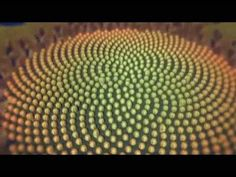The Miracle of 528 Hz Solfeggio and Fibonacci numbers