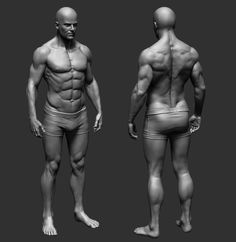 9 Best Anatomy   Anatomy 360 Refs images   Human anatomy