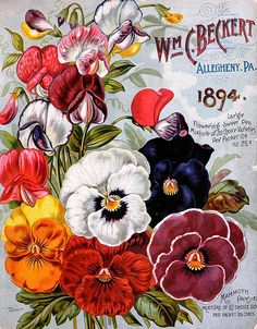 Wm. C. Beckett Garden, Field & Flower Seeds for Spring & Summer 1894 | Flickr - Photo Sharing!