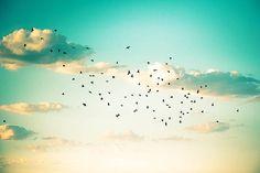 birds photography beach photography sunset birds flying 8x10