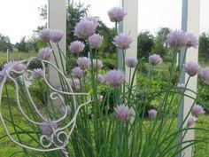 Vlasac Garden, Plants, Garten, Lawn And Garden, Gardens, Plant, Gardening, Outdoor, Yard