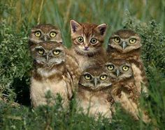 Funny animal pictures with an assortment of animals. Funny animal pictures with captions. Baby Animals, Funny Animals, Cute Animals, Baby Owls, Animals Images, Cute Kittens, Cats And Kittens, Cats Bus, Funny Animal Pictures