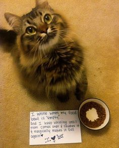 Mine do that too but they don't just want me to shake the bowl, they want more food in it! So spoiled!!! Lol!