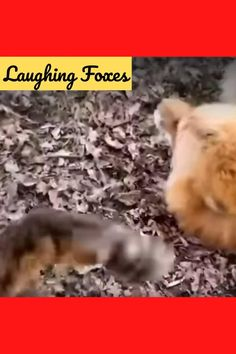 Cute Wild Animals, Cute Funny Animals, Cute Animal Videos, Funny Animal Pictures, Fox Video, Fox Dog, Weird Facts, Beautiful Creatures, Funny Memea