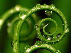 #SabíasQue la mayor parte del nitrógeno en las plantas se concentra en las hojas en forma de clorofila?