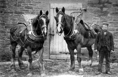 Old photograph of working horses in Perthshire, Scotland