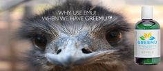 Emu oil is wonderful, but if you don't care to use animal products, you need to know about Greemu!