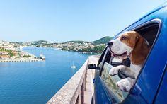 Pet Travel Tips www.tripswithpets.com  #pets #dog #petfriendly #travel #pet #petfriendlyhotels #petfriendlytravels #hotel