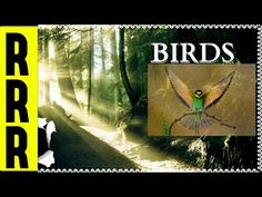 ✪ BIRDS ~ Singing Birds in the Morning, Relax, Nature Sounds, Bird Song, Nature - YouTube Stress Relief Exercises, Best Stress Relief, Stress Relief Music, Natural Stress Relief, Stress Relief Toys, Headache Relief, Anxiety Relief, Stress And Anxiety, Stress Relief Meditation