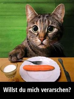e la dieta Weight Watchers - OMG too cute! For more cute funny cats pics visit . e la dieta Weight Watchers – OMG too cute! For more cute funny cats pics visit T Animals And Pets, Funny Animals, Cute Animals, Crazy Cat Lady, Crazy Cats, Cute Cats, Funny Cats, Animal Pictures, Funny Pictures