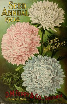 D.M. Ferry & Co,'s - Seed annual, 1904