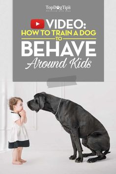 Training Dogs to Behave Around Kids Tips And Tricks, Training Your Puppy, Dog Training Tips, Training Classes, Training Plan, Dog Minding, Easiest Dogs To Train, Dog Training Techniques, How To Train Your