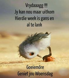 Afrikaanse Quotes, Goeie More, Good Morning Messages, Special Quotes, Videos Funny, Happy Friday, Wednesday, Qoutes, Words