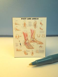Miniature Foot & Ankle Chart Poster : Dollhouse P883