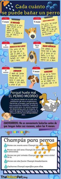 awesome La frecuencia del baño en perros