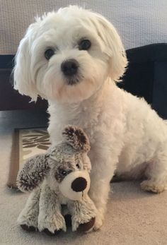 Cutie with a good friend.