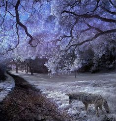 Infrared-photo28 in Beyond Visible: 100 Years Of Infrared Photographs