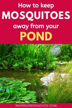Keeping mosquitoes away from garden ponds is something that most pond owners struggle with here are 7 ways to stop annoying mosquitoes breeding in your backyard pond ponds gardenponds backyardponds diy pool ideas pool and backyard decorating ideas Fish Pond Gardens, Koi Fish Pond, Garden Ponds, Backyard Ponds, Koi Ponds, Garden Fountains, Ponds For Small Gardens, Backyard Waterfalls, Water Fountains