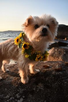 Dog Flower Collar, Dog Wedding Collar, Sunflower Flower Collar, Dog of Honor, Do… - Makeup İdeas Fairy Cute Funny Animals, Cute Baby Animals, Animals And Pets, Cute Puppies, Dogs And Puppies, Cute Dogs, Mastiff Puppies, Puppies Tips, Awesome Dogs