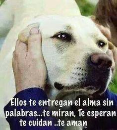 Perros #animales